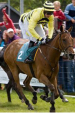 Horse racing at Cartmel in the Lake District